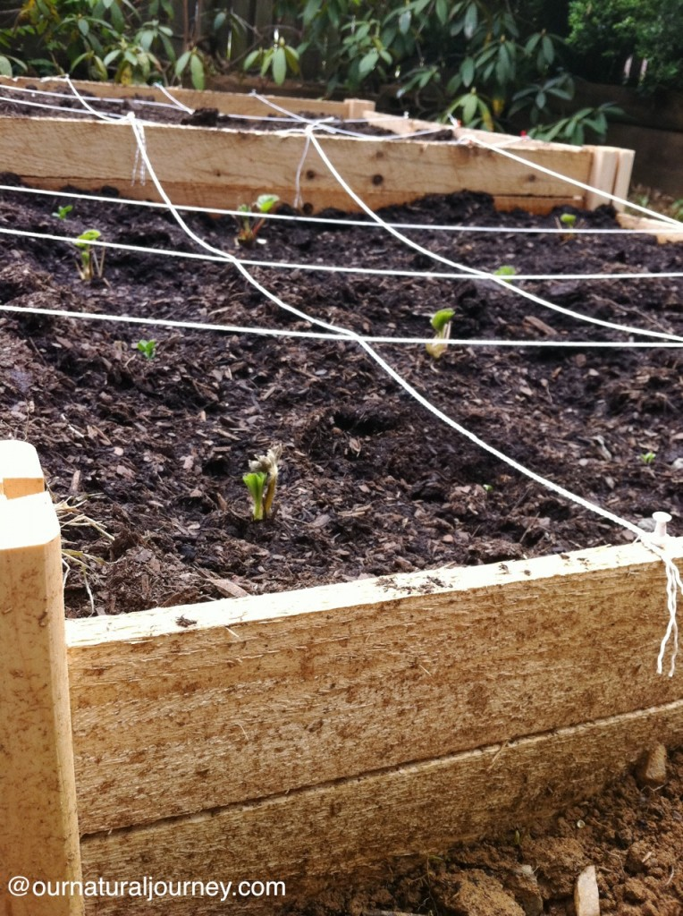 square-foot garden